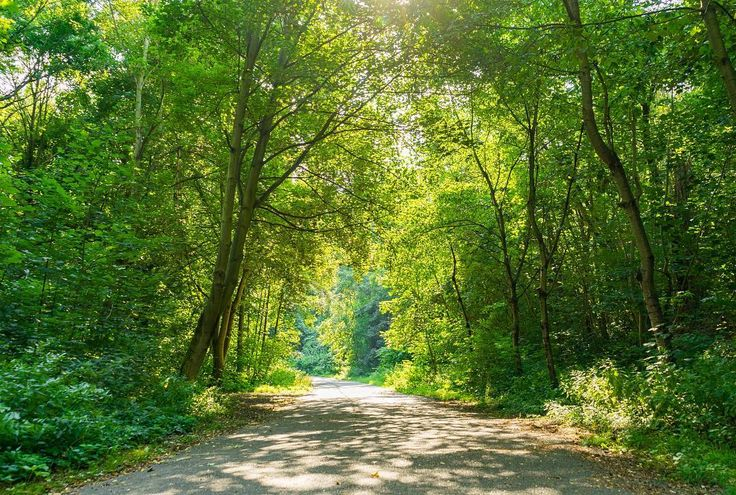 Was macht ihr so am Wochenende? Bei dem schönen Wetter sollte man unbedingt einen Ausflug ins Grüne machen! Viel Spaß! #frühling #wald #landscape #trees #green #leipzig #thisisleipzig #soschönistdeutschland #spaziergang #sonnenschein #instalove #natur #naturelovers #sunnyday #spring