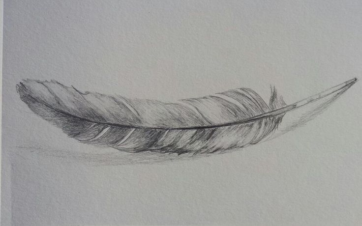 Feather Drawing | Original Feather Drawing pencil sketch by paintpaperscissors