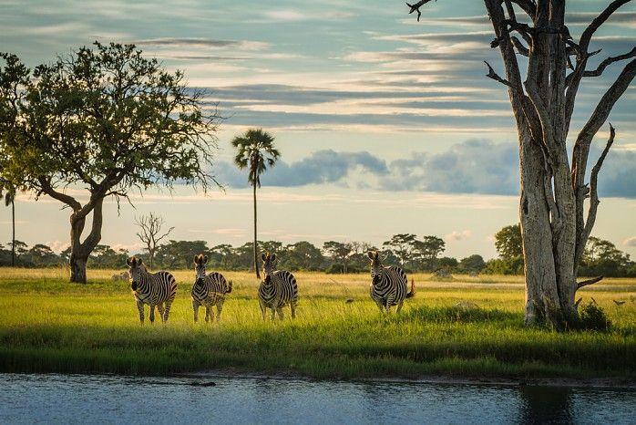 A dazzling dazzle #Hwange #safari