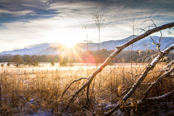 Nature and Wildlife Photography Tips for Beginners