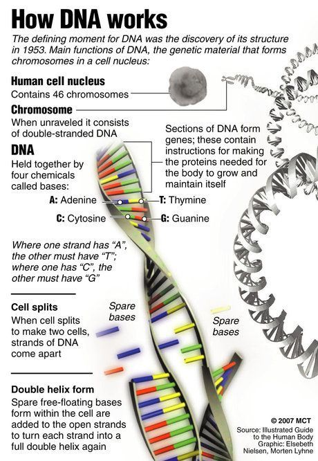 DNA, whose structure was discovered by Watson and Crick.