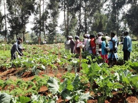 Na strednej škole Ngenia v Keni sa žiaci a žiačky starajú o záhradu jedinečným spôsobom.