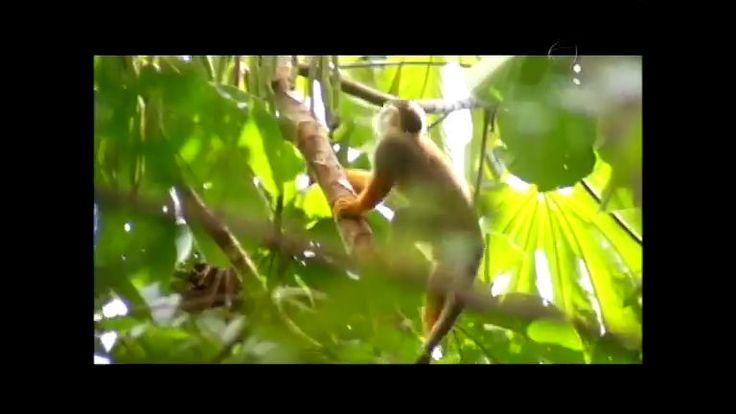 Conheça as iniciativas de preservação da Amazônia no Parque Ambiental do Utinga.
