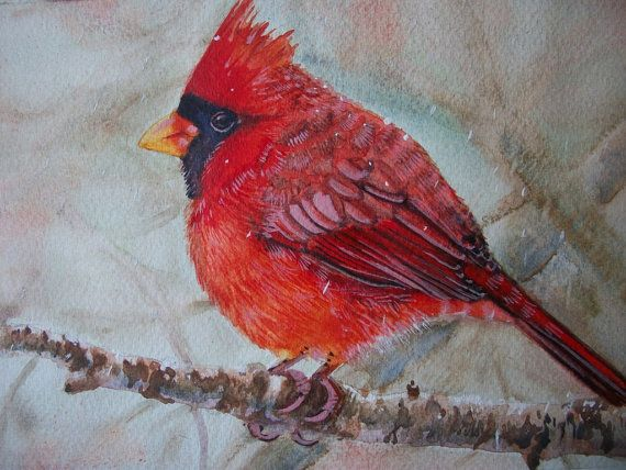 Uccello Cardinale rosso acquerello su carta dipinto di Stellangelo