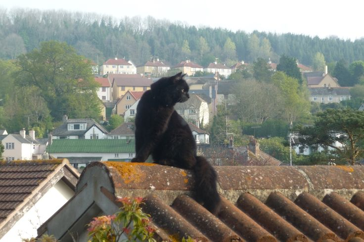 Fluffy cat on a roof!