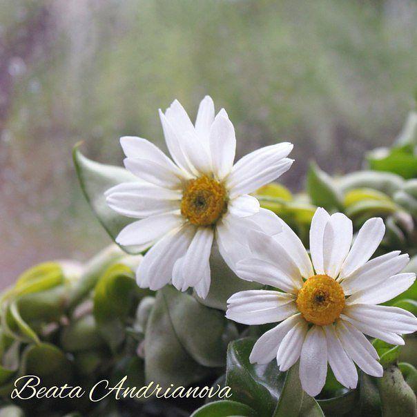 Шпилечки - ромашки в процессе #ромашкишпильки#ромашкиизфоамирана #шпильки #цветыизфоамиранаКрасноярск#цветыизфоамирана #свадебныеукрашения #цветочныеукрашения #украшениядляволос #фоамиран #красноярск #цветы#flowers #inspiration#homemade #ручнаяработа #wedding#свадьба #decor #presents #подарки#handmadeflowers #foamiran#flores#ромашки #krasnoyarsk#beautiful #instasize #instapic #camomile #handmade