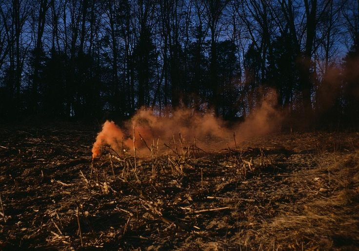 smoke, smoke bomb, cornfield, photography, 35mm