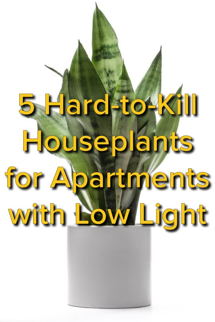 5 Hardy Hard-to-Kill Houseplants for Apartments with Low Light — From the Archives: Greatest Hits