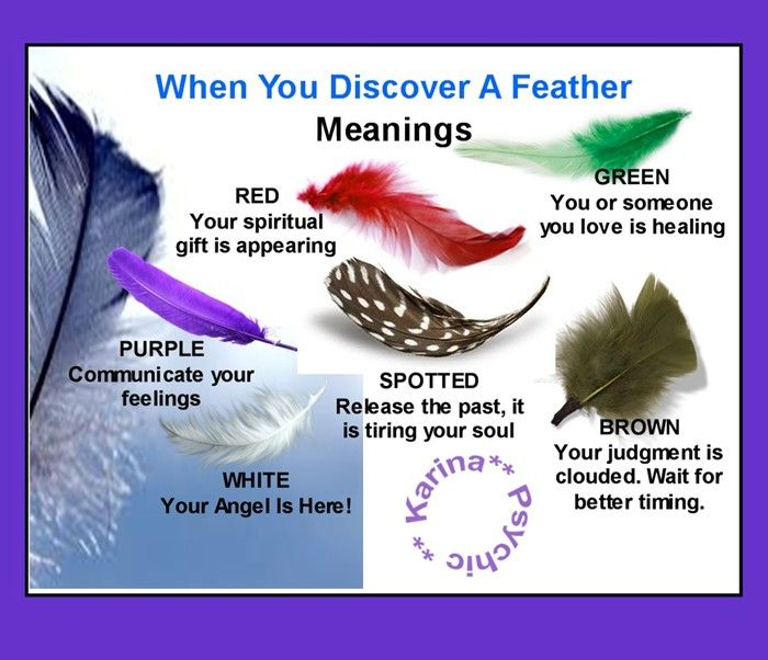 Meanings Of Feathers Brown White Green And Spotted