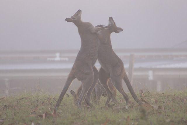 Amongst Gum Trees: Camera Club - Animal behaviour
