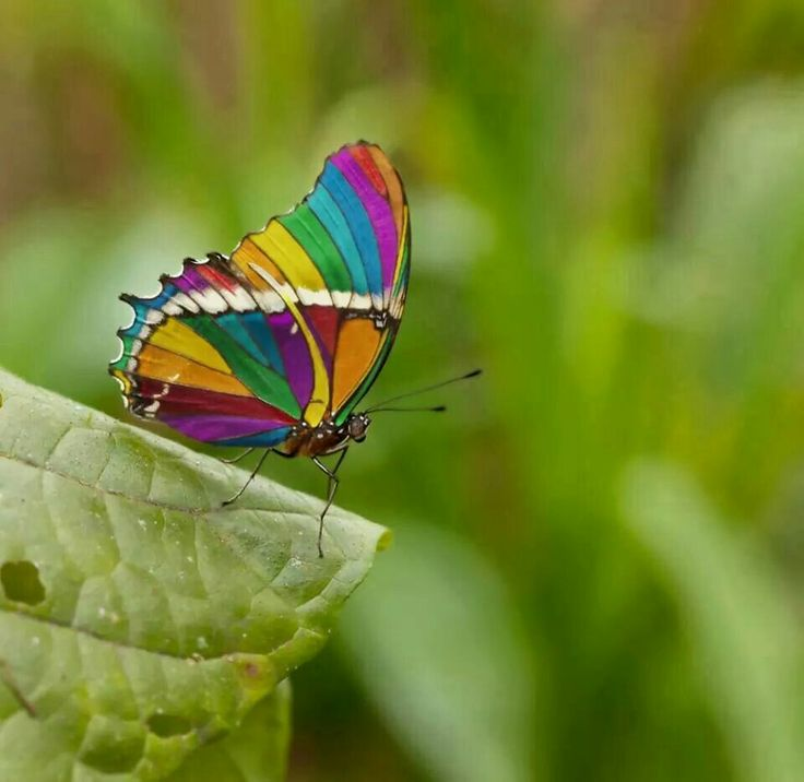 Beautiful...is this real?   Rainbow butterfly, Beautiful ...