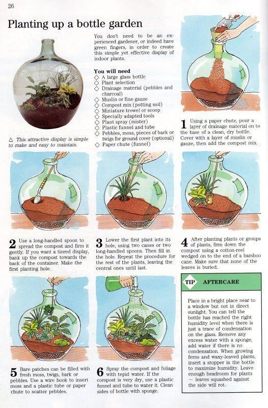 DIY Glass Terrarium Ideas (Eine Anleitung zur Herstellung von Terrarien & Wartung