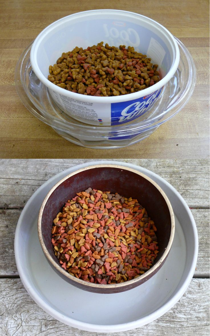 Cheap Cat Food To Feed Feral