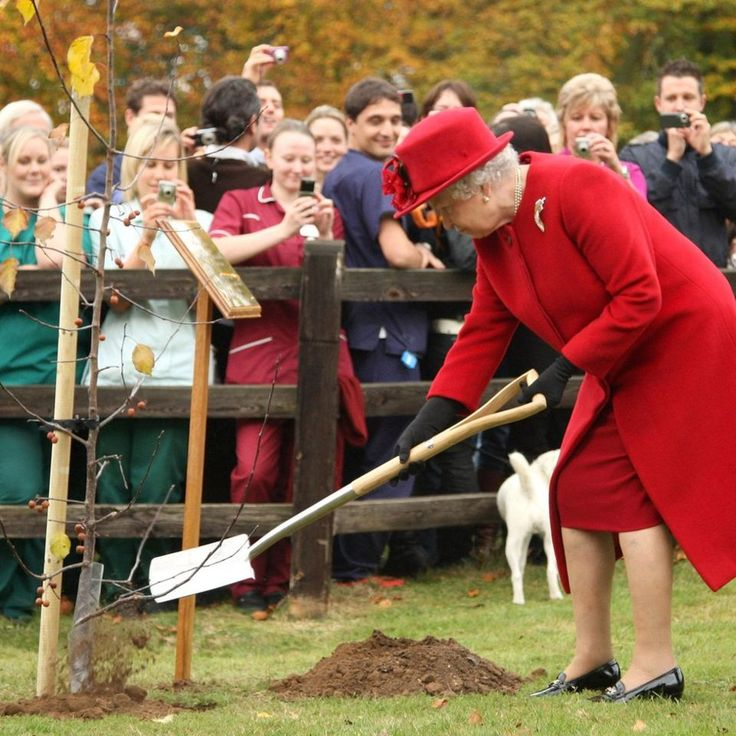 Queen Elizabeth II planting a tree at Newmarket Animal Health Trust during a royal visit which marked her 50th year as the charity's patron