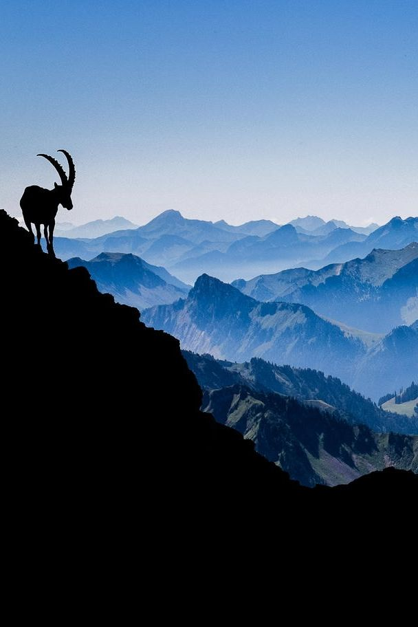 Shadow of the Ibex by Gilles Baechler via 500px.
