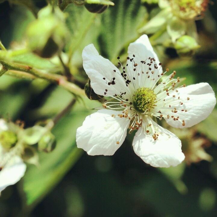 Sweet sweet blossom