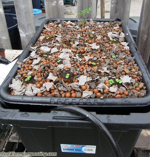 Outdoor Vermiponics System