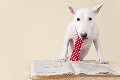 How Breaking News Headlines Can Help You Learn Business English, Economics and More