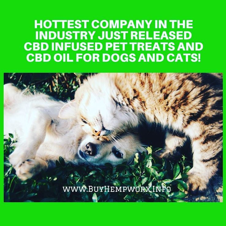 Find out more here: http://buyhempworx.info Pure 100% Organic Non-GMO Gluten Free LEGAL in 50 states -  Of course us pet parents just hate to see our pets suffer.  They cannot tell us what's wrong and we can't tell them it will be all right.  Ever since #CBDOil has become so popular to treat us peopleveterinarians across the country have come to the conclusion it also helps the fur patients.  Dogs cats pets all respond very well to #CBD Oil (which is without the THC). Unlike CBD (no TCH) the…