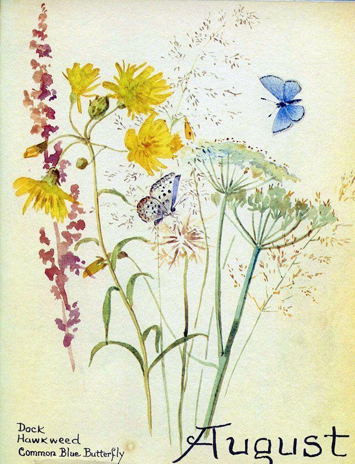 Edith Holden 'August'