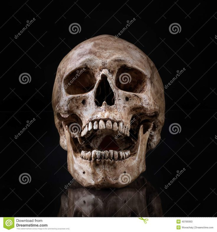 human skull front jaw ...