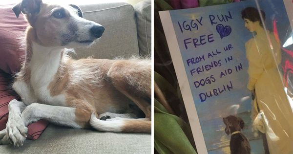 Hunden Iggy blev femte dödsoffret i terrordådet – hedras nu av en hel värld