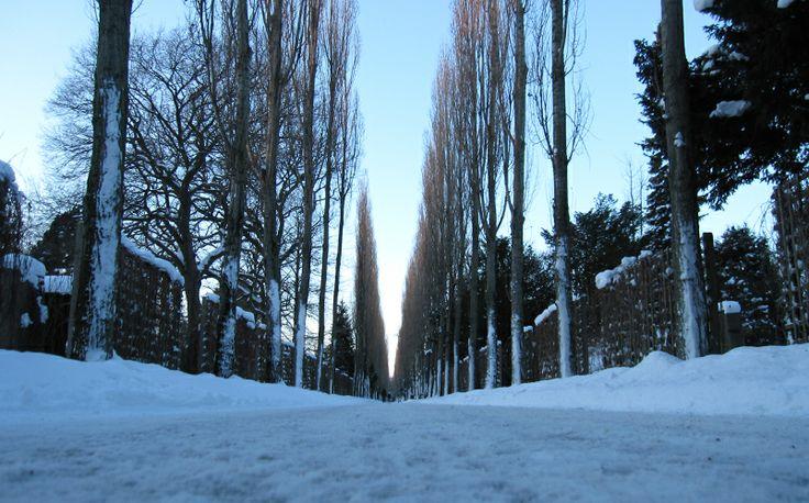 Winter_ Cemetery_Allé