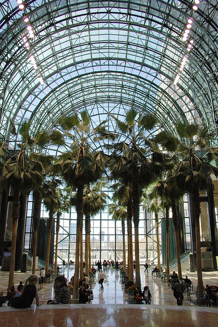 Winter Garden Atrium, NYC - in the World Financial Center, across the highway from the original WTC. Restored to its former glory - destroyed in WTC attack. I loved going across the bridge across the West Side Highway at lunchtime & visiting the shops, or just wandering around & clearning my mind.