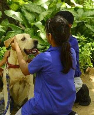 The love of a dog - Cuddle them at airports, prisons and hospitals. A friendly wet nose and wagging tail can be surprisingly therapeutic on tough days