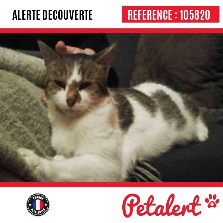 06.04.2017 / Chat / Versailles / Yvelines / France