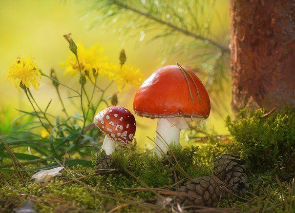 «А веснушки у тебя от папы, сынок». Фотограф – Влад Владиленов: nat-geo.ru/photo/user/46815/