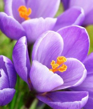 8 best the color purple images on pinterest flowers garden purple purple flower names mightylinksfo