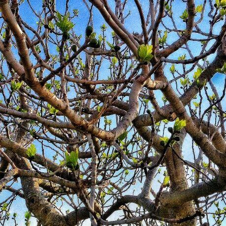 #spring in apulia