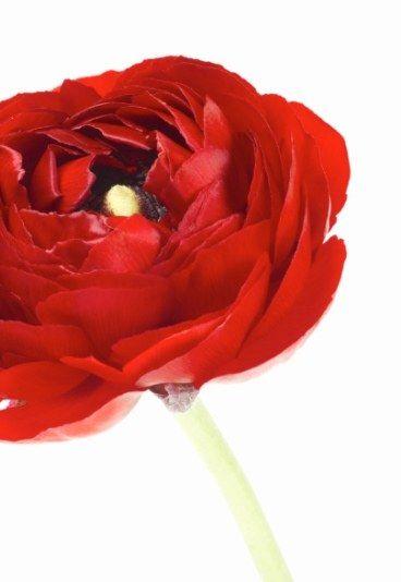 34 best des fleurs images on pinterest | flowers, language and plants