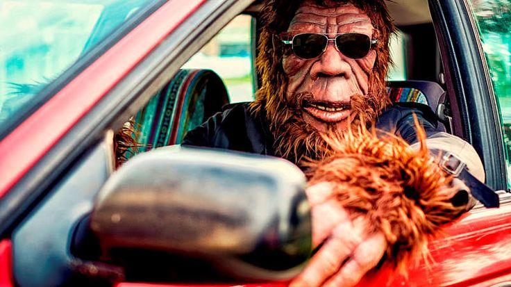 Platz 2: Gorillas müssen vorne sitzen-Im US-Bundesstaat Minnesota dürfen Gorillas mit im Auto fahren, aber nur auf dem Vordersitz. Wer die Menschenaffen hinten im Fahrzeug platziert, riskiert einen Strafzettel.