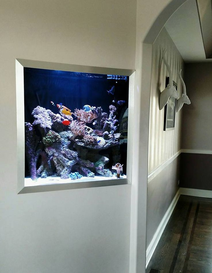 17 best ideas about fish tank wall on pinterest wall for Built in fish tank