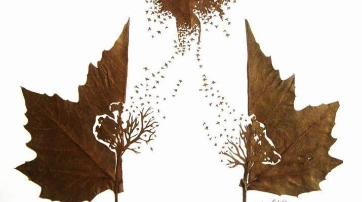 trairile unei frunze bianca ionel
