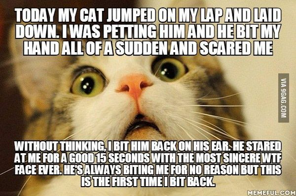 Neither of us knew what to do after that so we went back to petting/getting petted - 9GAG