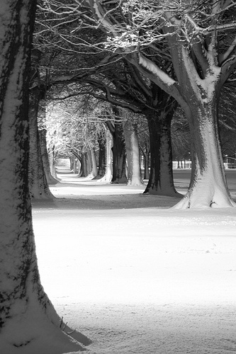 Clevershot Photography Harrogate  The Stray Snow Tree Tunnel