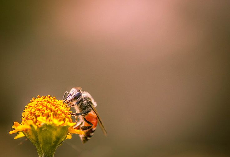 Collecting Honey by snapshotdatabase on 500px