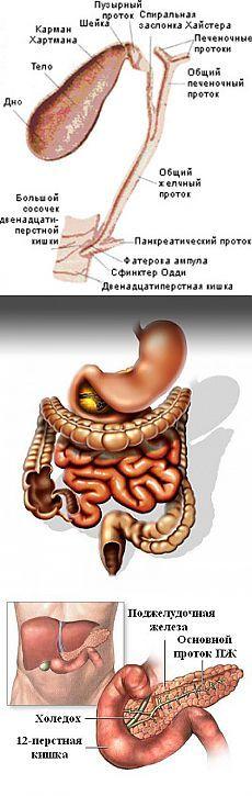 Безопасное очищения и восстановление функции поджелудочной железы - Очищение организма от шлаков и паразитов в домашних условиях .  Когда поджелудочная железа засорена, в ней поселяется паразит трематода и свиоми отходами (яды) парализует работу поджелудочной железы