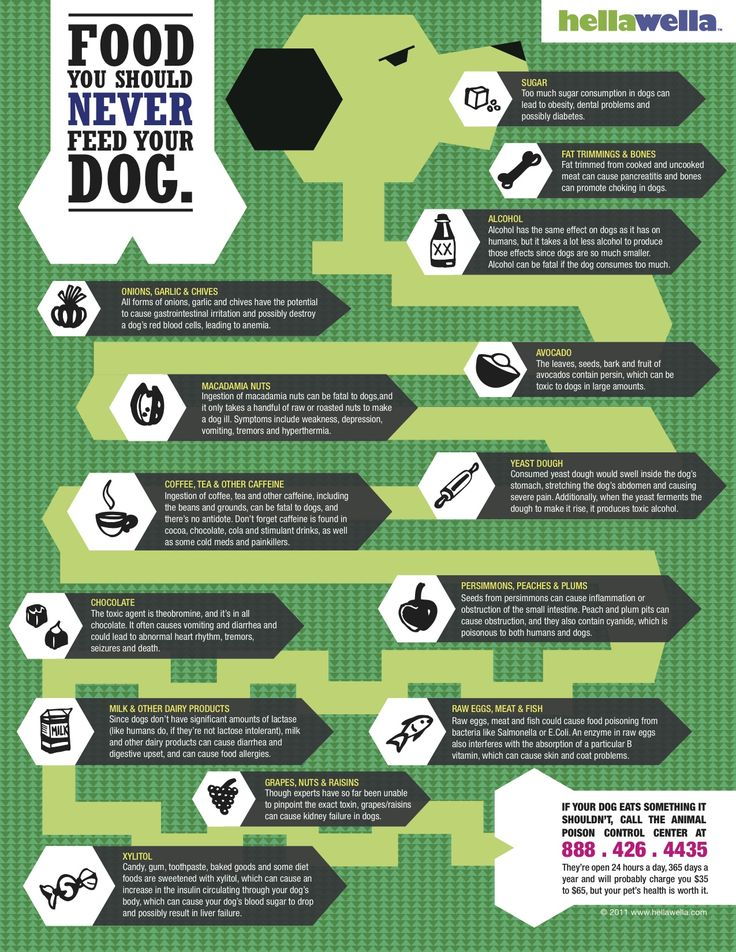 Foods to keep away from your dog.