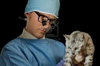 6 de Agosto Día del Medico Veterinario Hispanoamericano http://www.mascotadomestica.com/efemerides/6-de-agosto-dia-del-medico-veterinario-hispanoamericano.html