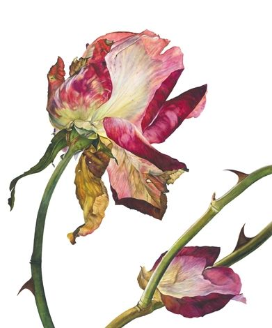 A Rose in Winter by Rosie Sanders - i was browsing in Waterstones to day and saw this artists flowers - they are sublime