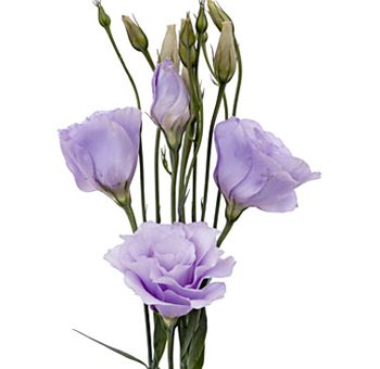 61 best lisianthus ok images on pinterest flower tutorial lavender lisianthus flower papery texture and color works perfectly for vintage look thecheapjerseys Choice Image