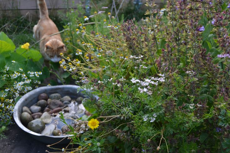 Waterbowl with pebbles for the bees to sit on, while they drink, so they dont drown. The cat likes it too!