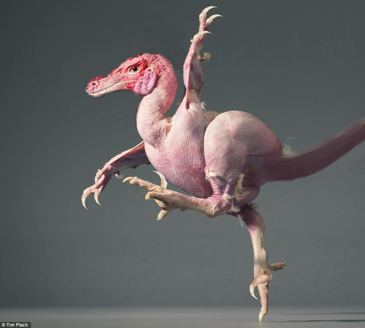 """Veloci-chicken by Tim Flach, of the UK, his latest project is photoing animals in a project called """"more than human."""""""