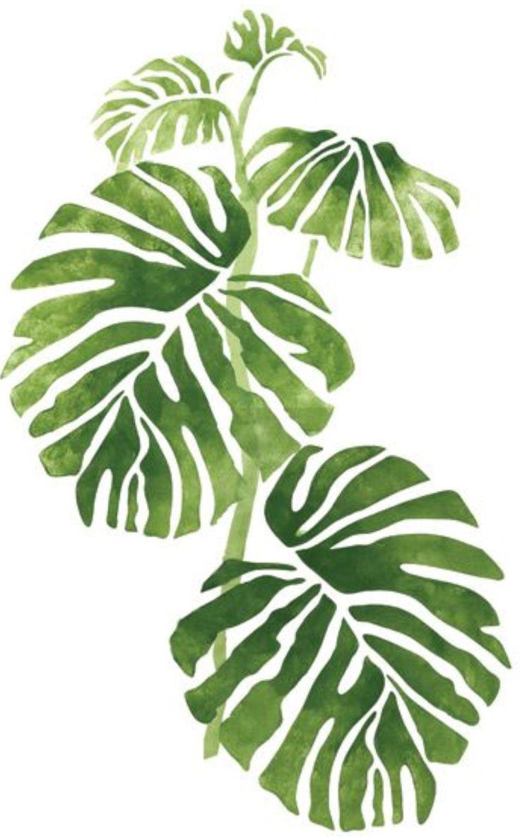 best images about kokodama indonesia on pinterest plants