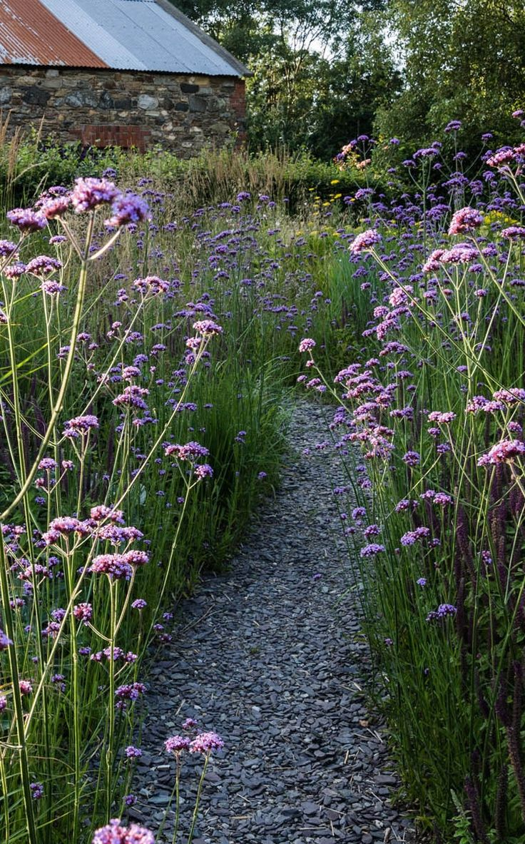 I have never been a fan of slate paths until I saw Verbena bonariensis soften her hard edges.