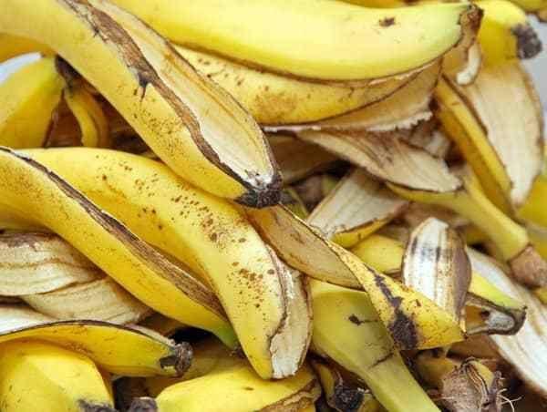 Je bananenschil kan je nog eens van pas komen! De bananenschil kan voor veel dingen gebruikt worden, van kwaaltjes verhelpen to...
